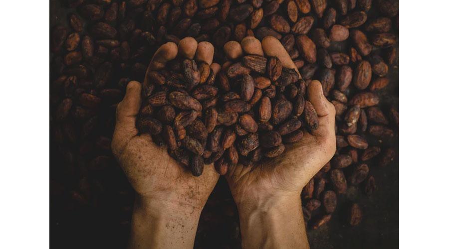 Semi di Cacao grezzo